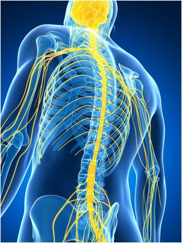The Autonomic Nervous System Penny Heiple Three Principles Healing